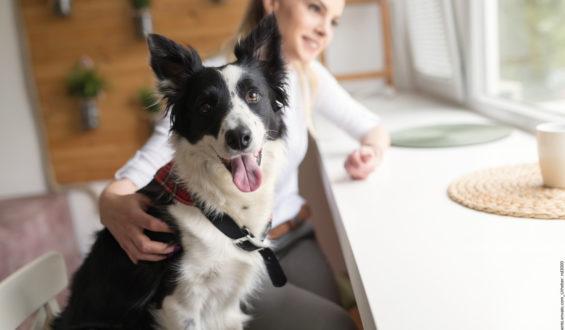 Tierkommunikatoren – lernen, was sie auszeichnet